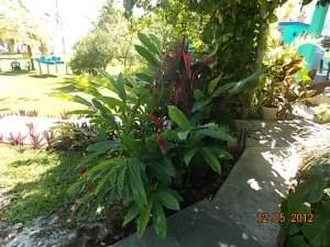 Big lush bromeliads