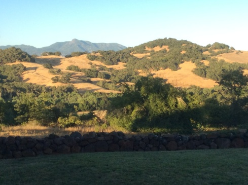 The setting sun provided the backdrop in Healdsburg.