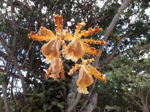Orchids on Cozumel Island