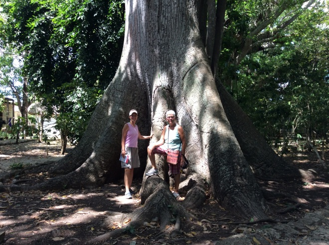 These trees were enormous.