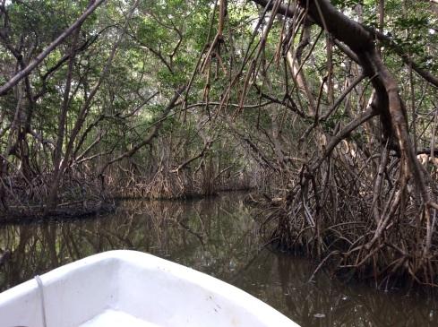 A ride through the mangrove tunnel.