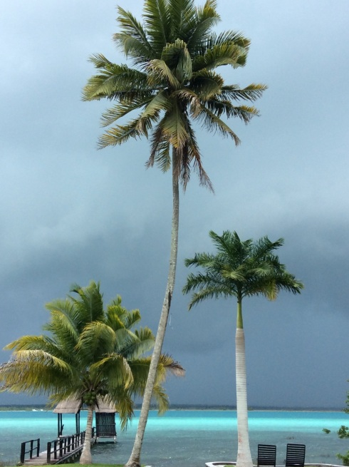 Palm trees are perfectly adapted to withstand heavy wind.